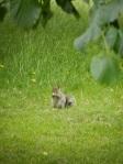 Squirrel 2014-06-20 20.39.02