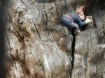Elfin Oak 2014-06-20 20.59.50