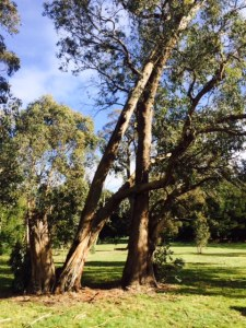 Hugging Tree